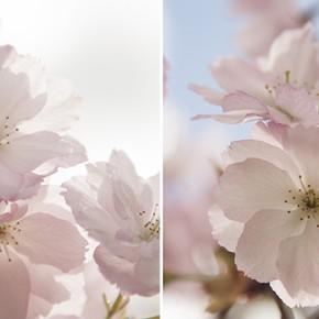 Първа пролет!